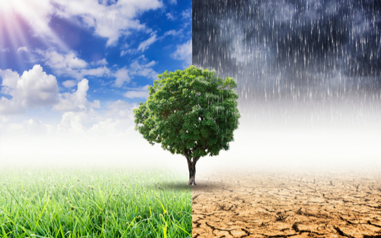 Climate change now considered a top three issue customers want businesses to tackle